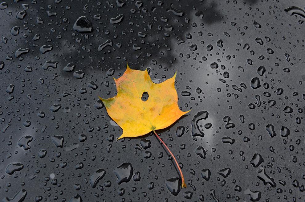 мокрый лист осенью, фото