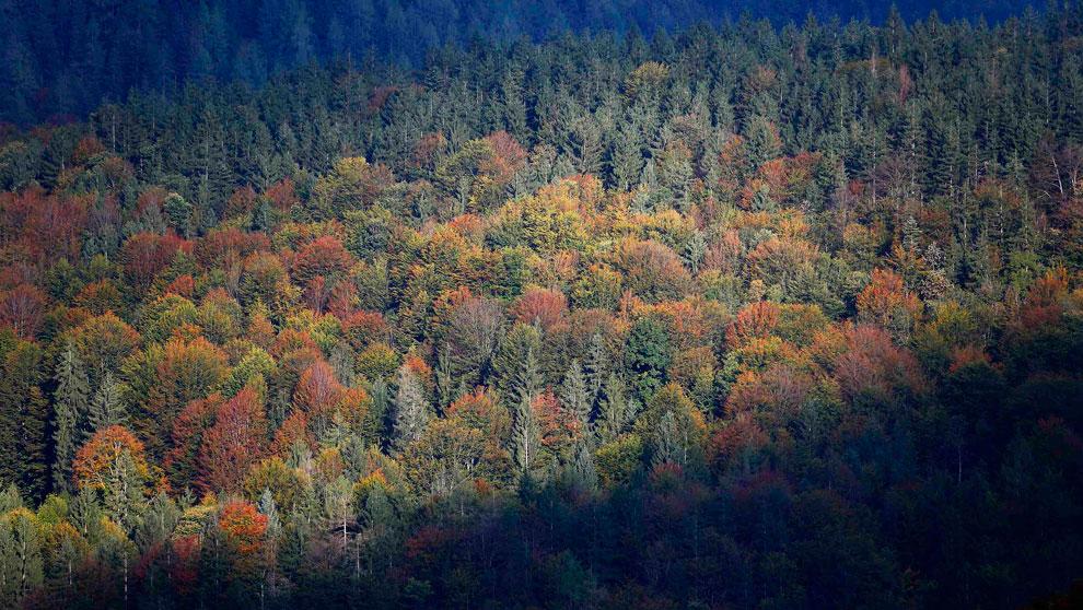 осенний лес в Германии