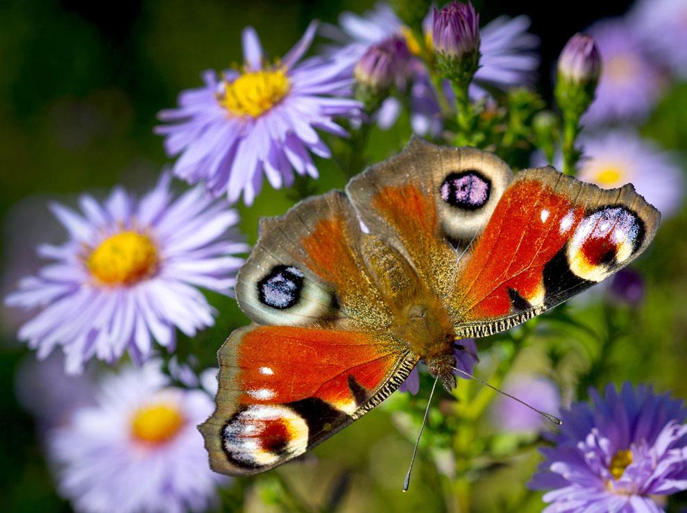 бабочка в теплый осенний день