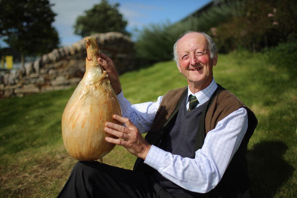 гигантский лук, урожай осени