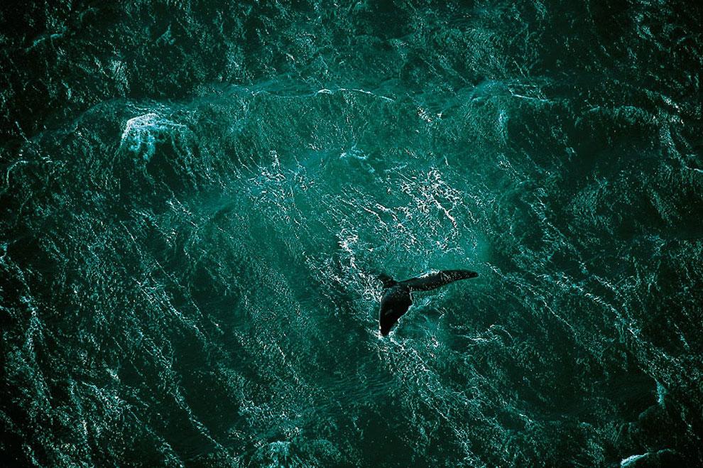 кит около Аргентины, фото