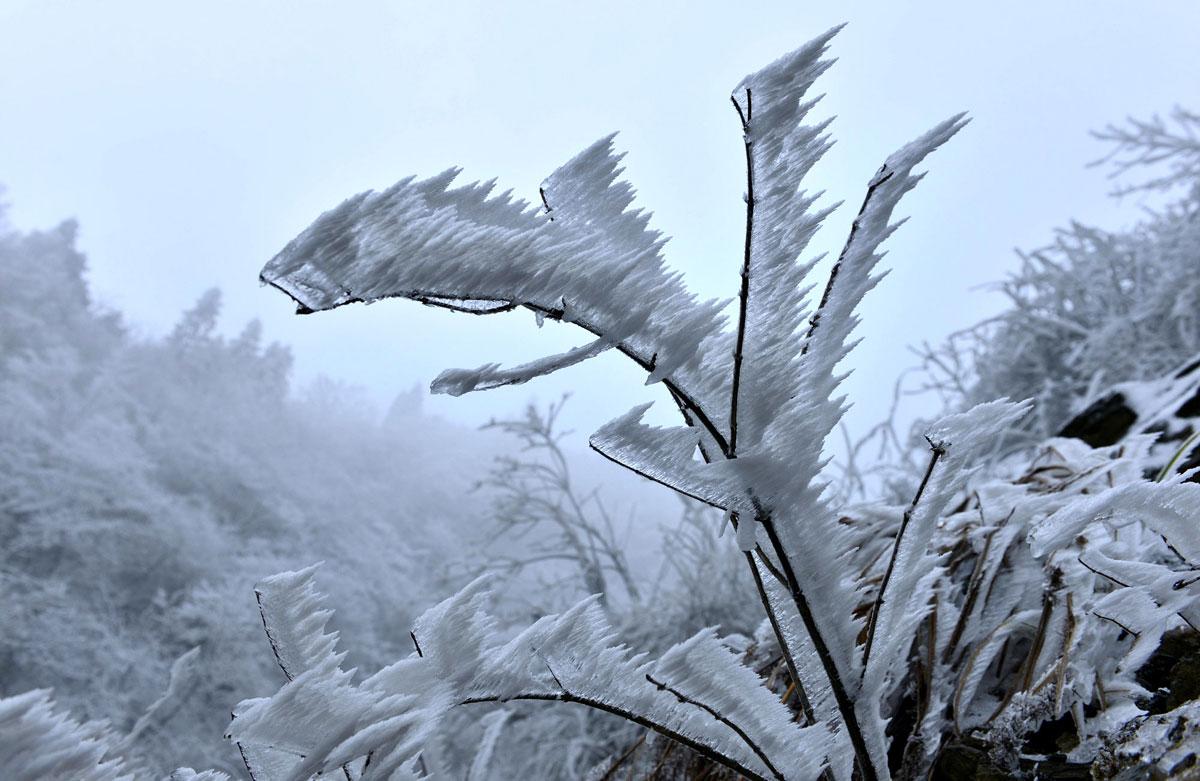 Замерзшая ветвь