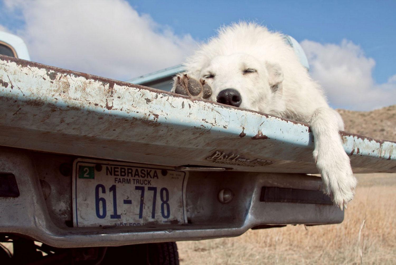 Собака на ранчо, фото