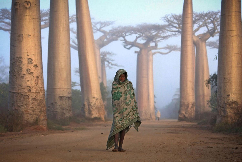 на западном побережье Мадагаскара баобабы, фото