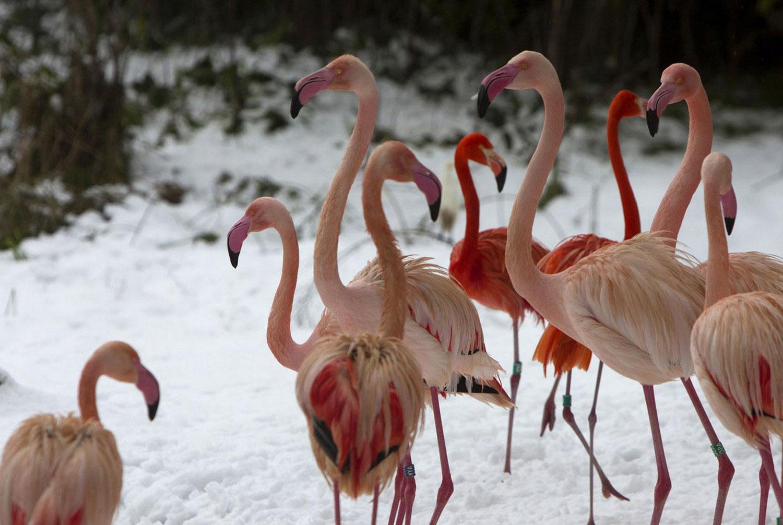Фламинго, фото