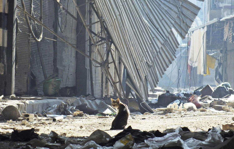 Кошка сидит среди обломков