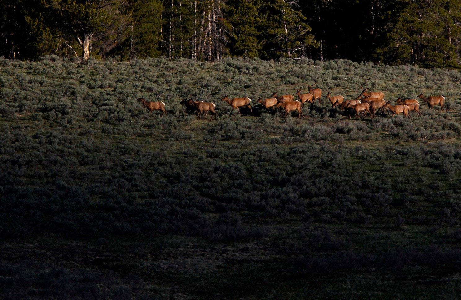 лоси в долине Хайден