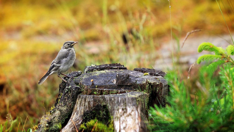 птица на пне