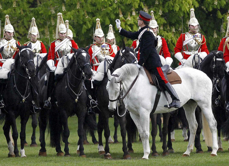 Члены Королевской конной гвардии, фото животных