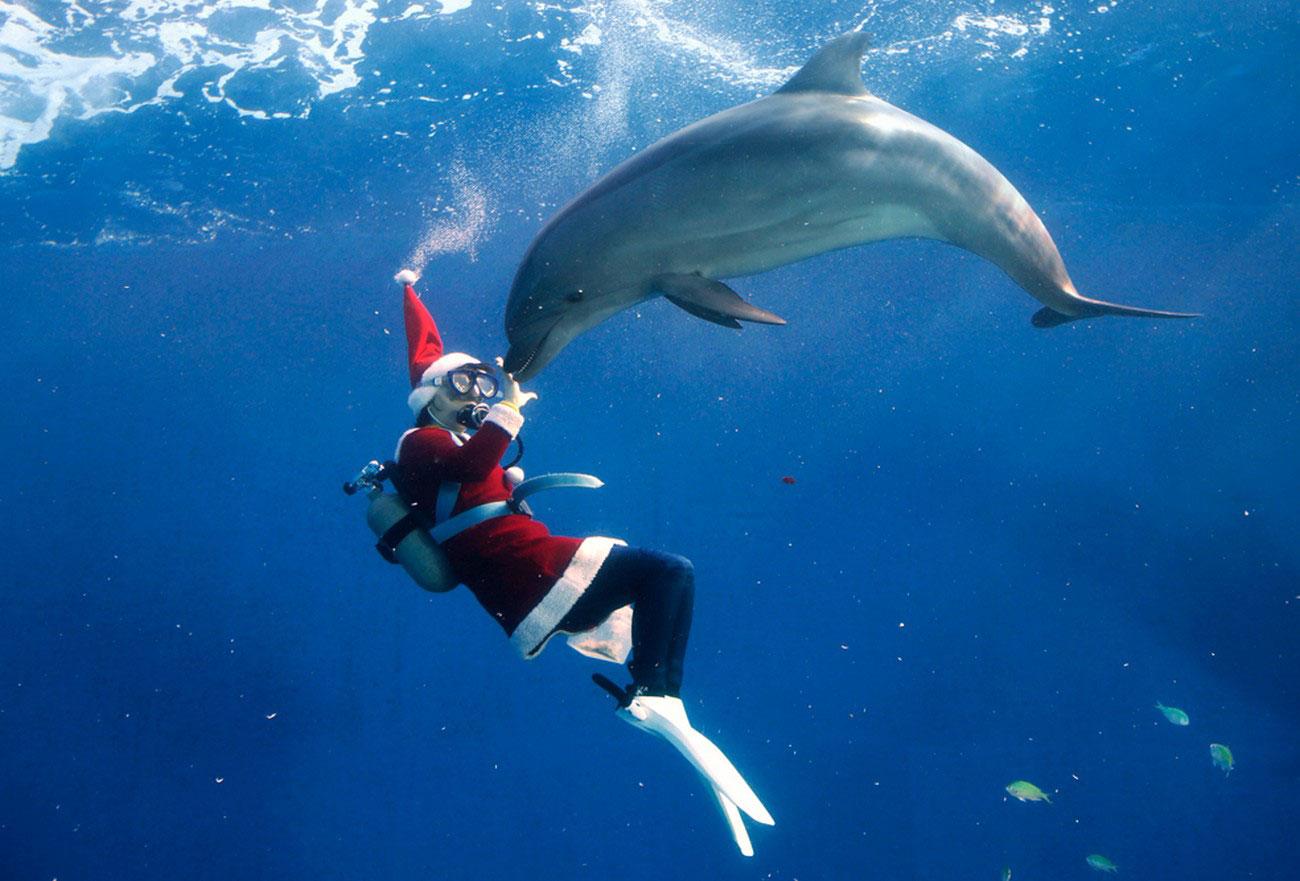 Санта Клаус плавает с дельфином, фото