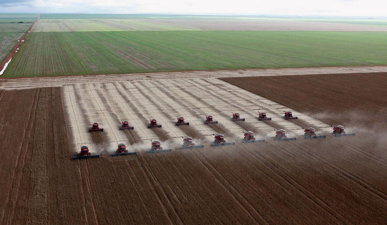 Сбор урожая соевых бобов, фото