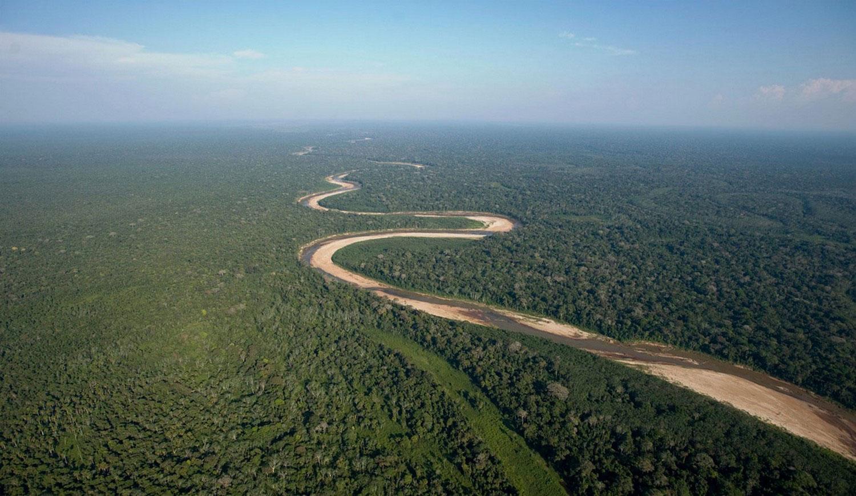 тропический лесной массив в Боливии, фото