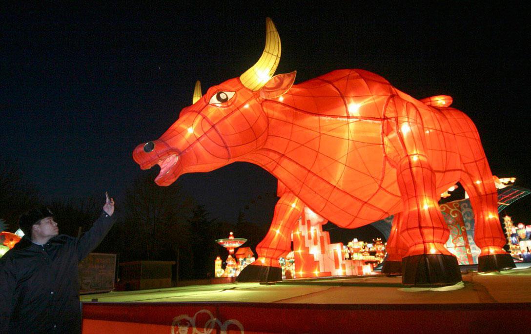 гигантский фонарь в форме быка, фото