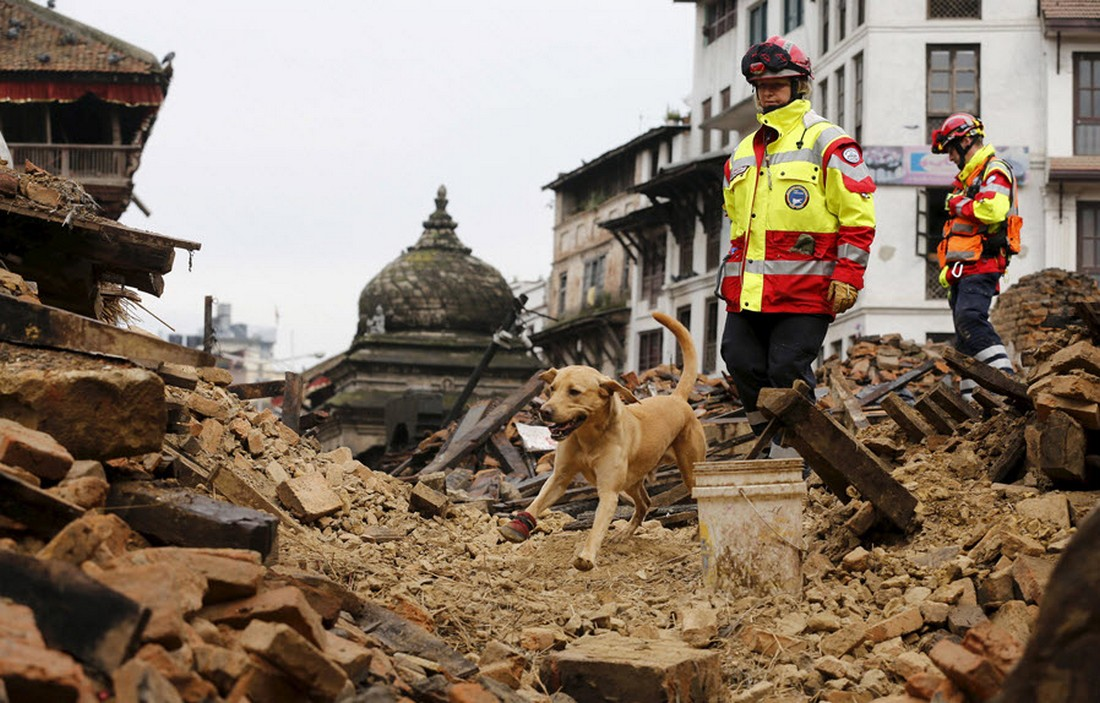 Собака-спасатель