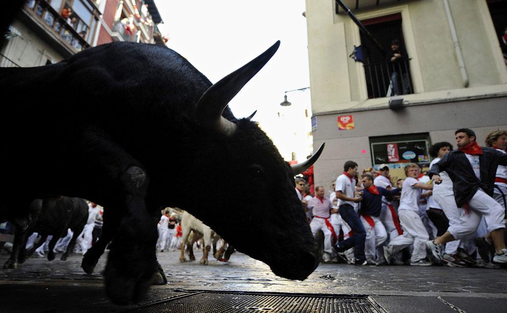 быков гонят по улицам Испании
