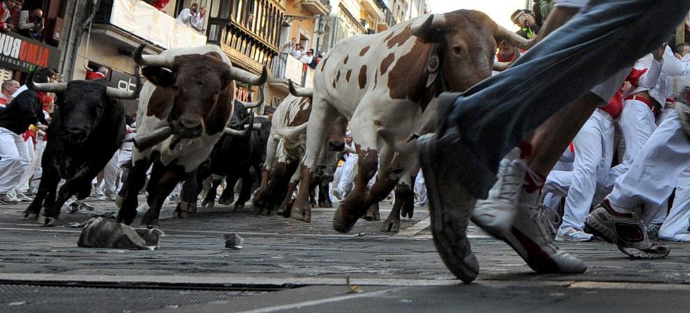 быков гонят на арену корриды
