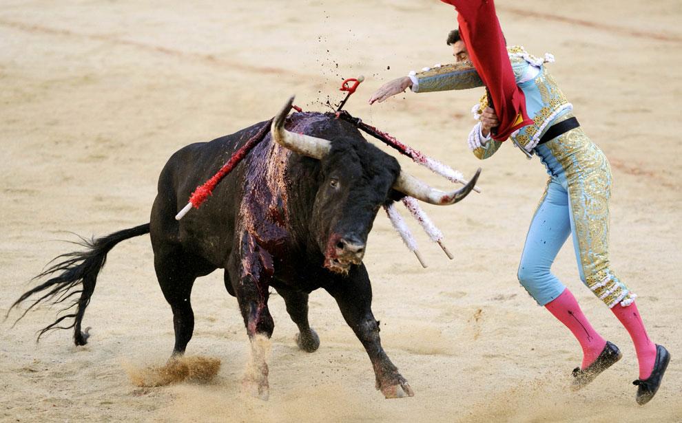 Испанский матадор убивает быка на арене в Испании