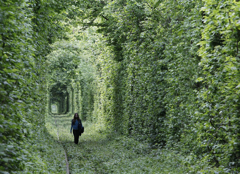 заросшая зеленью железная дорога, фото