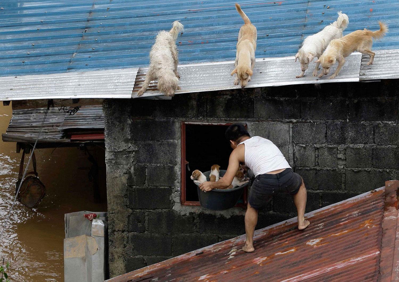 животные страдают от наводнения, фото