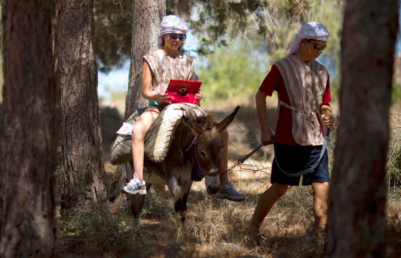 туристы в парке на осле, фото