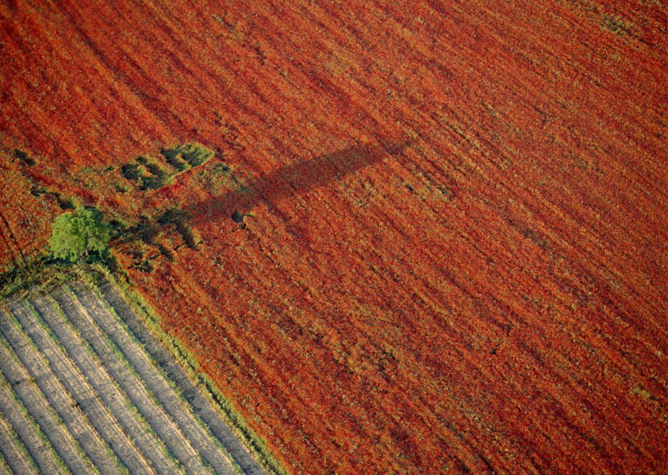 Маковое поле, фото
