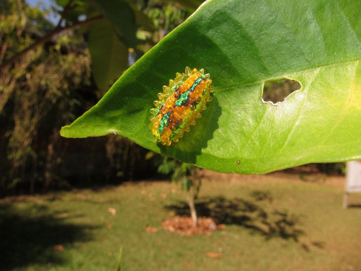 радужная гусеничка