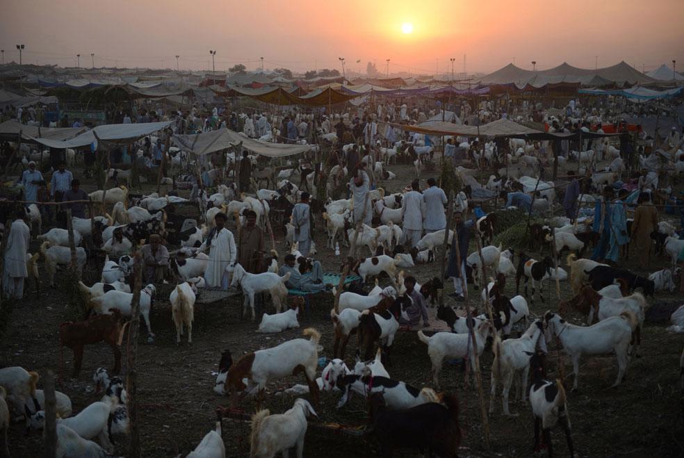 Рынок домашнего скота, фото Курбан-байрам