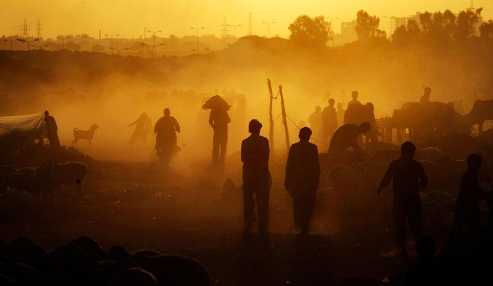 Пакистанцы на животноводческом рынке, фото Курбан-байрам