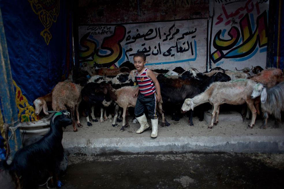 овцы для продажи в рамках подготовки к Ид аль-Адха, фото Курбан-байрам