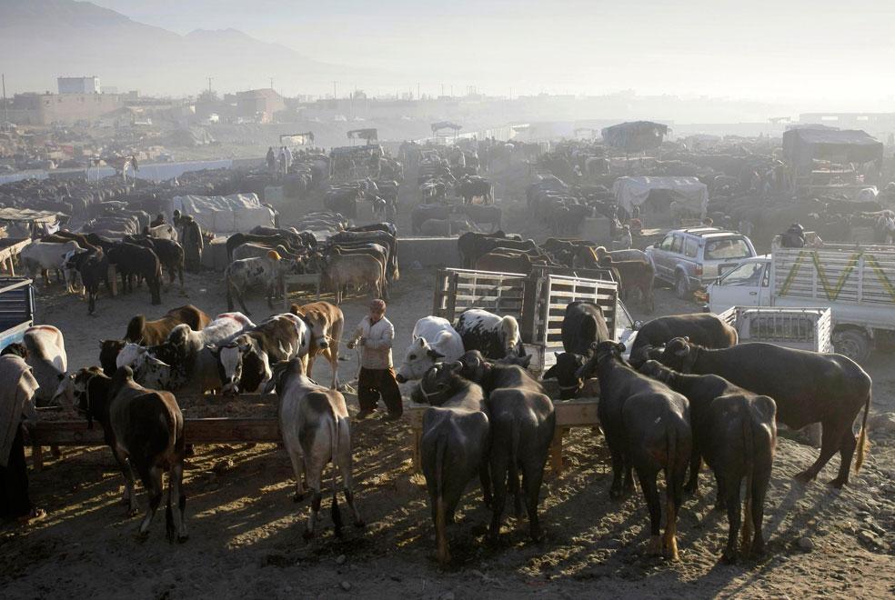 скотный рынок Афганистана, фото Курбан-байрам