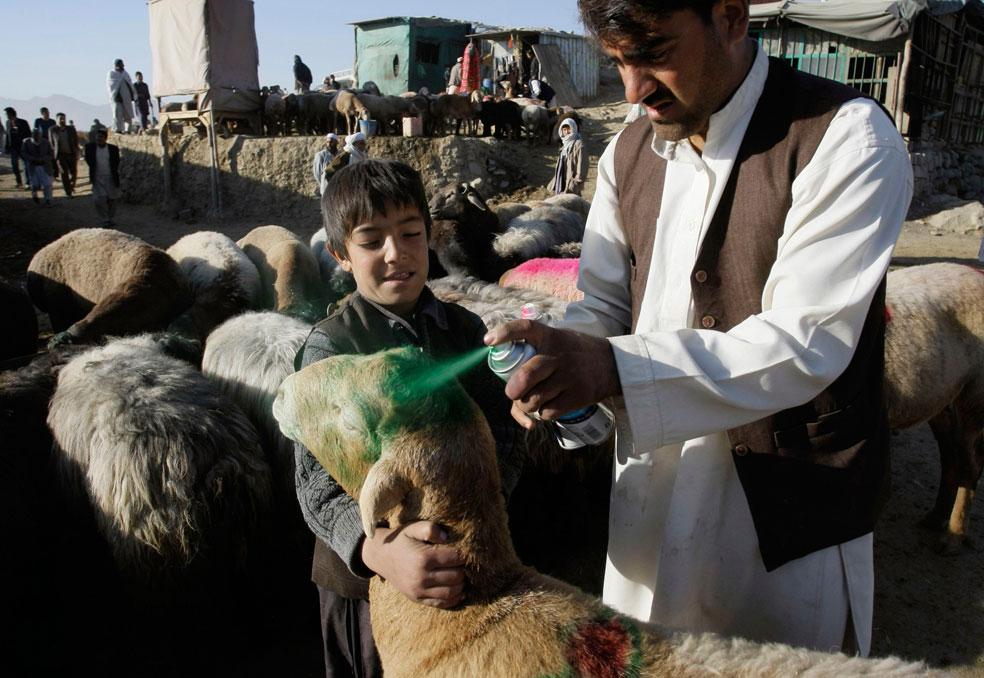 овцу красят зеленой краской, фото Курбан-байрам