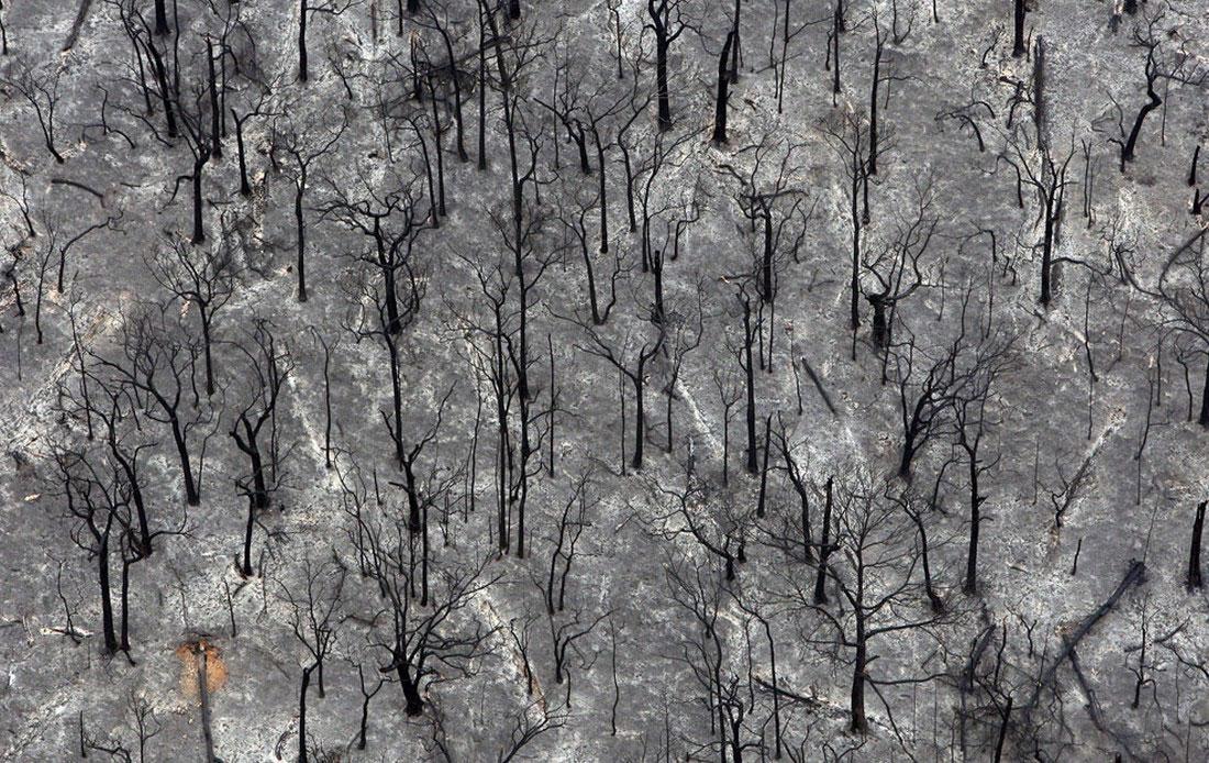 сгоревшие леса, фото из Австралии