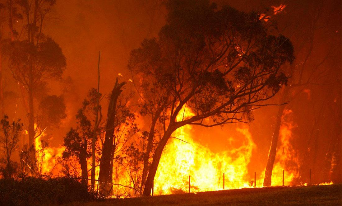 Лесной пожар уничтожает деревья, фото из Австралии