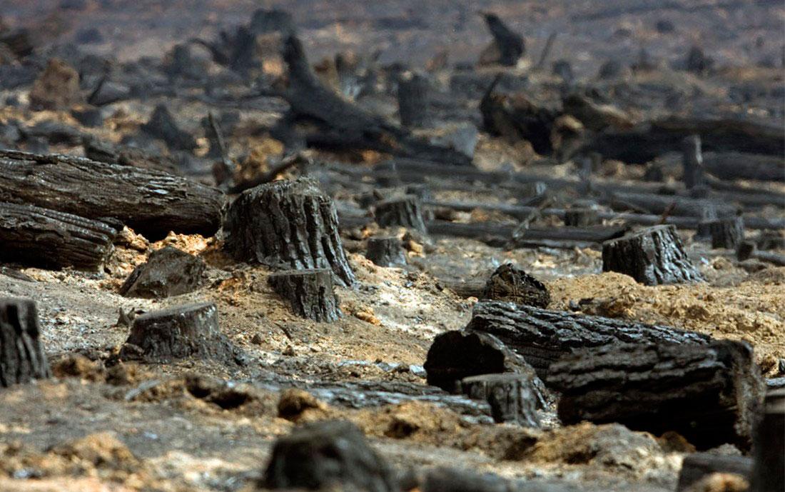 Обугленный пейзаж, фото из Австралии