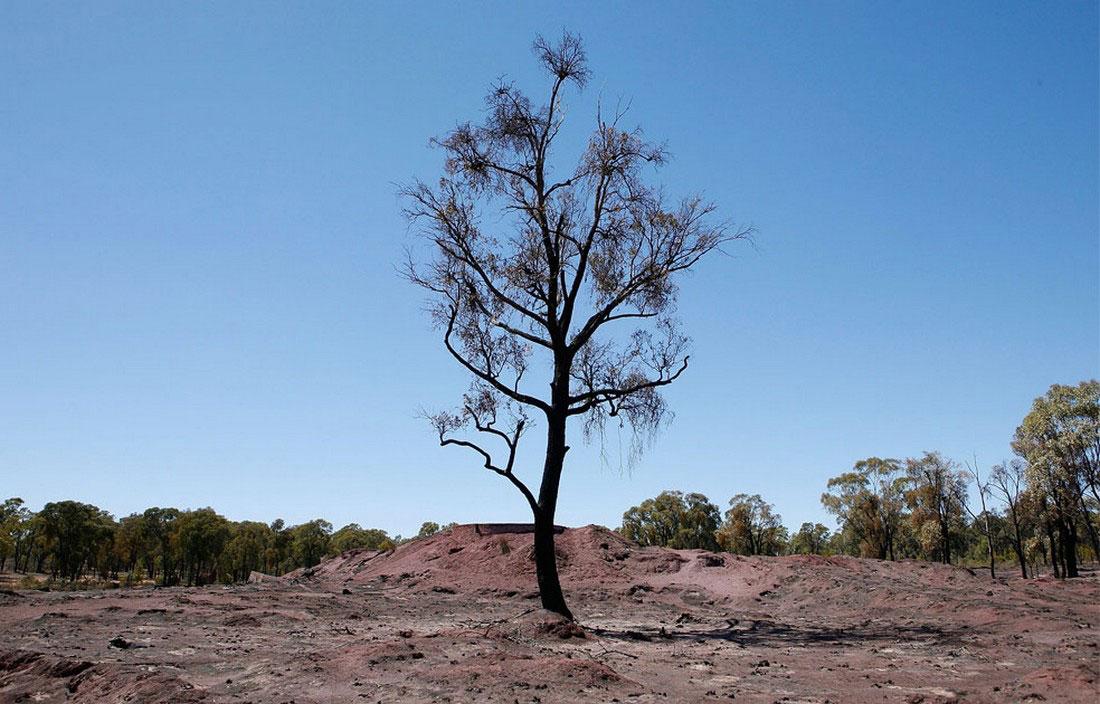погибшее дерево, фото из Австралии