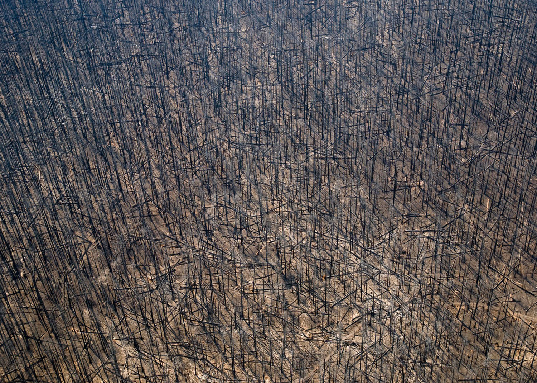 пожар в национальном парке США, фото