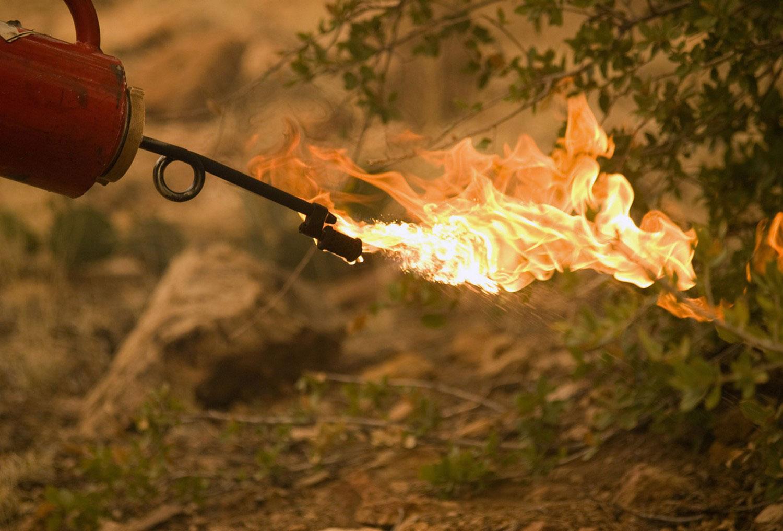 встречный огонь в борьбе с лесным пожаром, фото