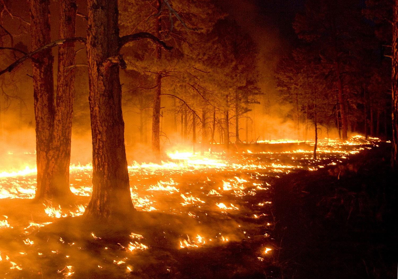 пожар в американском заповеднике, фото