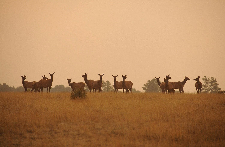 животные в дыму, фото лесных пожаров