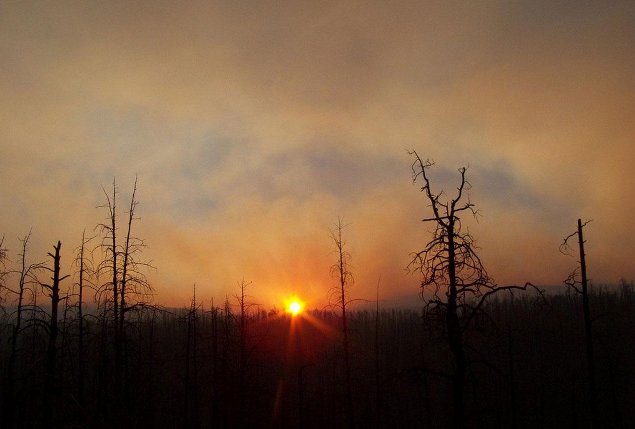 Уничтоженный пожаром лес, фото лесных пожаров