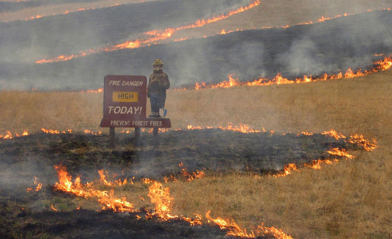 в районах Тусона, фото лесных пожаров