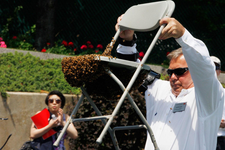 рой пчел, фото летнего пейзажа
