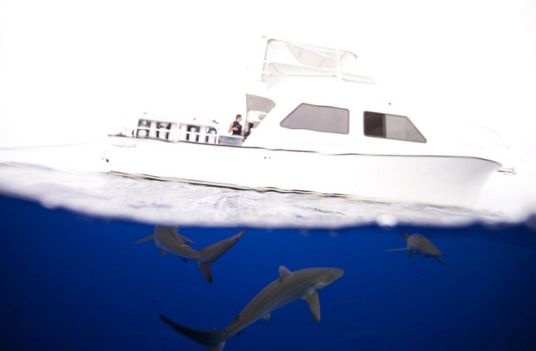 на Багамах с акулами, фото