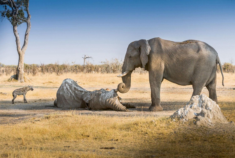 слон, фото летнее