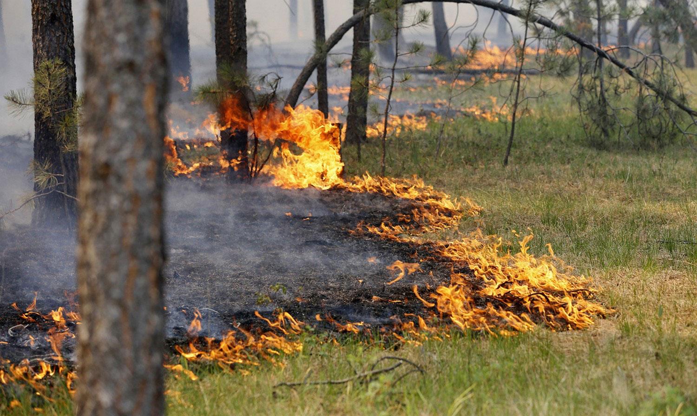 Лесной пожар в Колорадо