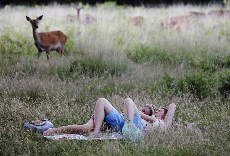 олени и люди в Ричмонд парке