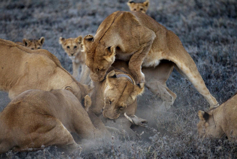 хищники на охоте