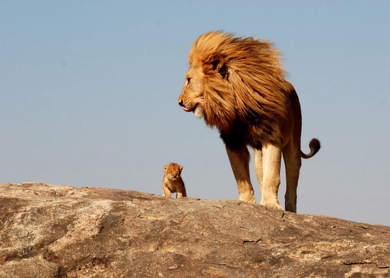 дикие звери на скале