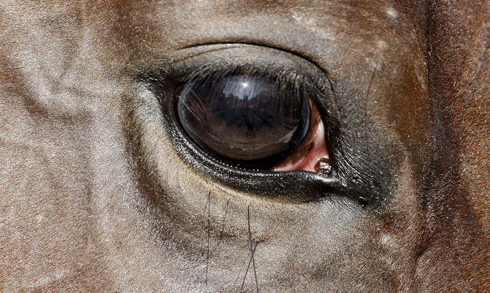 Глаз лошади, фото