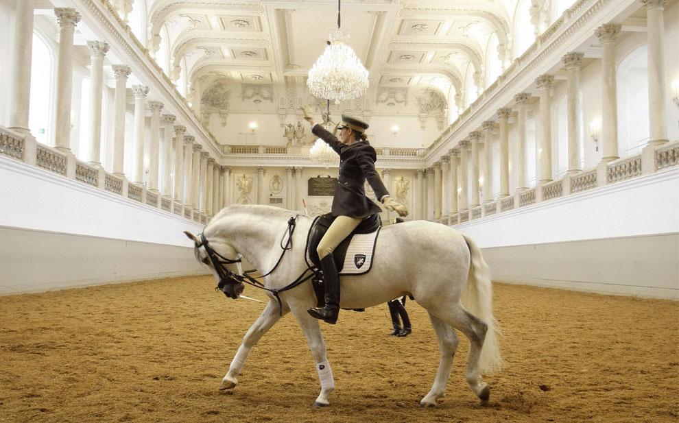 Липицанер, породы лошадей, фото